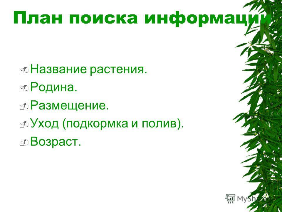 План поиска информации Название растения. Родина. Размещение. Уход (подкормка и полив). Возраст.