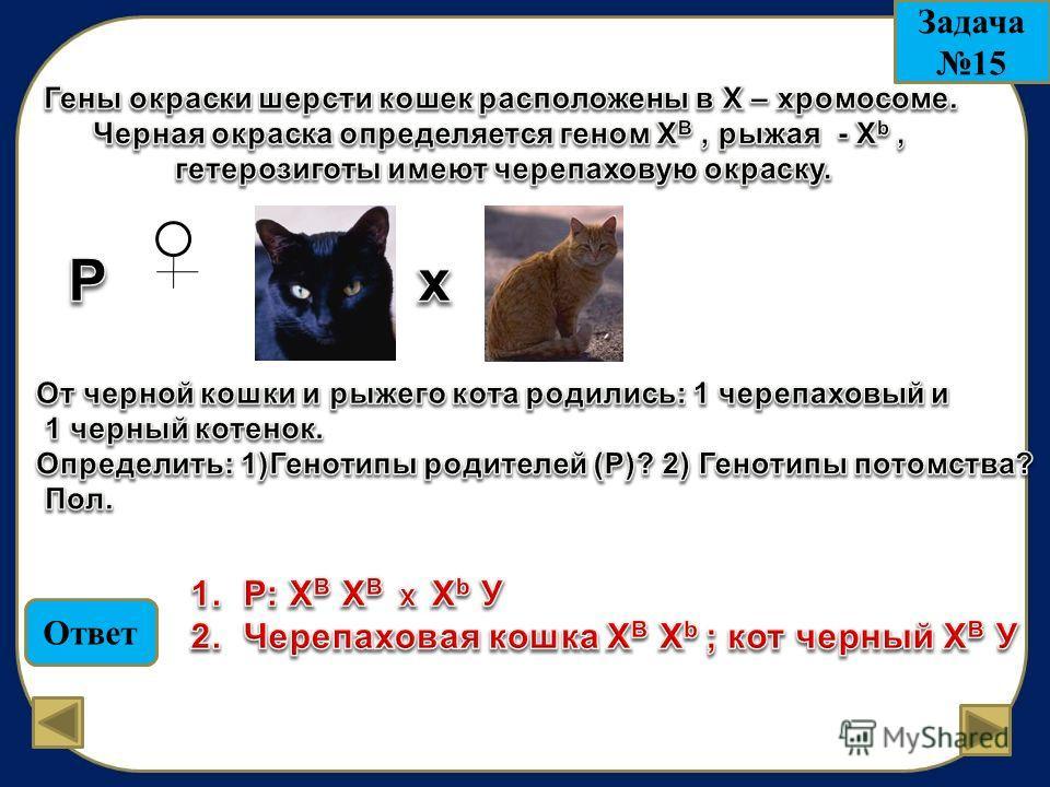 Ответ Задача 15