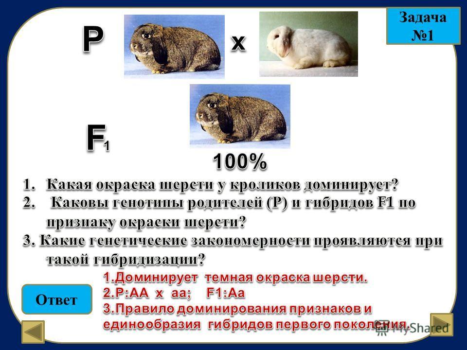 Ответ Задача 1