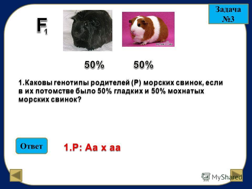 Задача 3 1.Каковы генотипы родителей (Р) морских свинок, если в их потомстве было 50% гладких и 50% мохнатых морских свинок? Ответ 1.P: Аа х аа