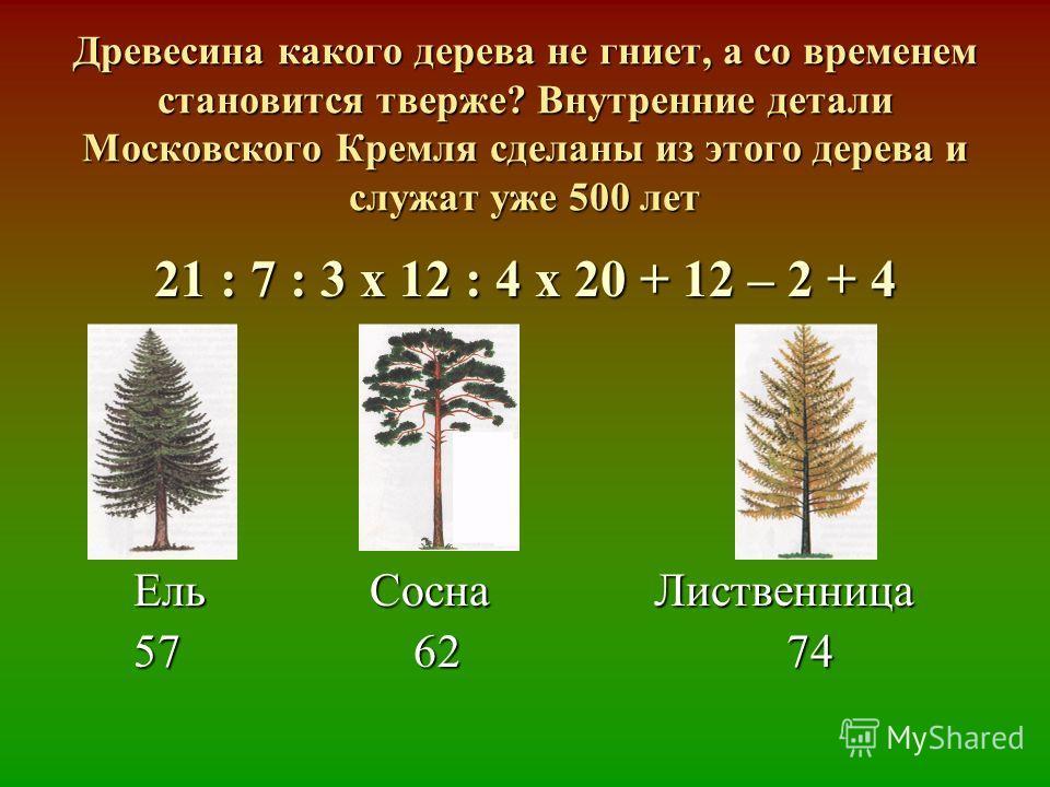 Древесина какого дерева не гниет, а со временем становится тверже? Внутренние детали Московского Кремля сделаны из этого дерева и служат уже 500 лет 21 : 7 : 3 х 12 : 4 х 20 + 12 – 2 + 4 Ель Сосна Лиственница Ель Сосна Лиственница 57 62 74 57 62 74