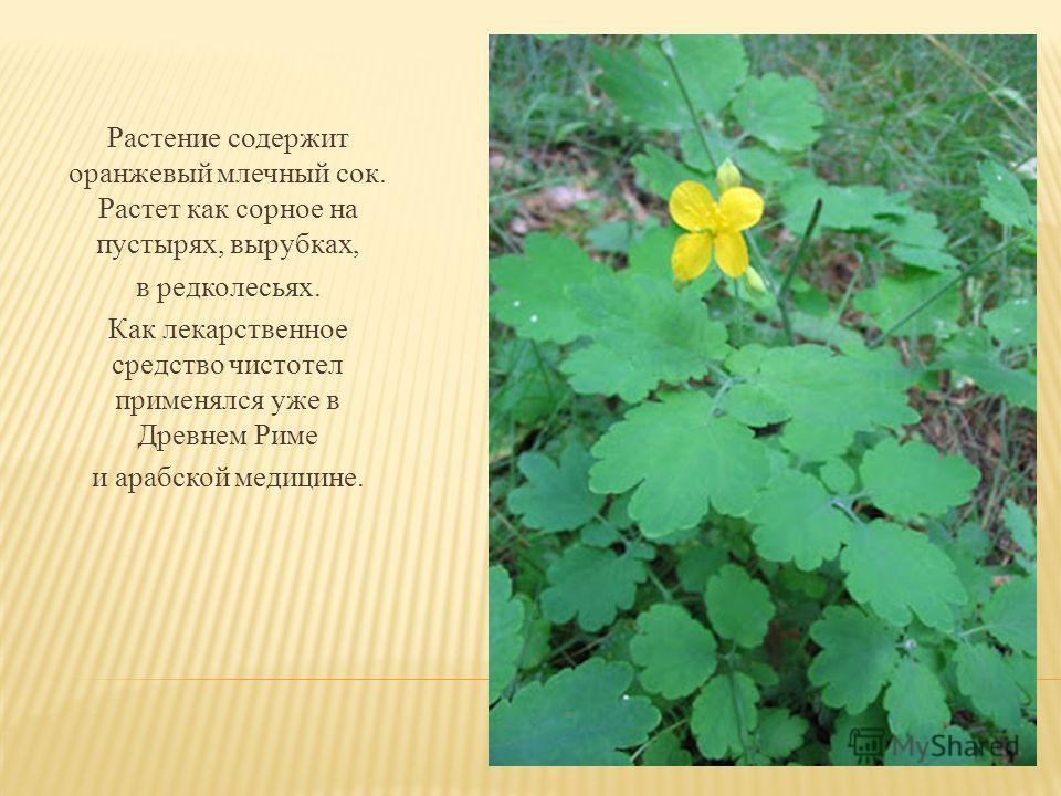Растение содержит оранжевый млечный сок. Растет как сорное на пустырях, вырубках, в редколесьях. Как лекарственное средство чистотел применялся уже в Древнем Риме и арабской медицине.