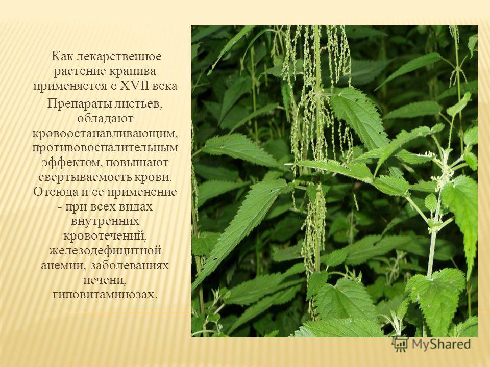 Как лекарственное растение крапива применяется с XVII века Препараты листьев, обладают кровоостанавливающим, противовоспалительным эффектом, повышают свертываемость крови. Отсюда и ее применение - при всех видах внутренних кровотечений, железодефицит