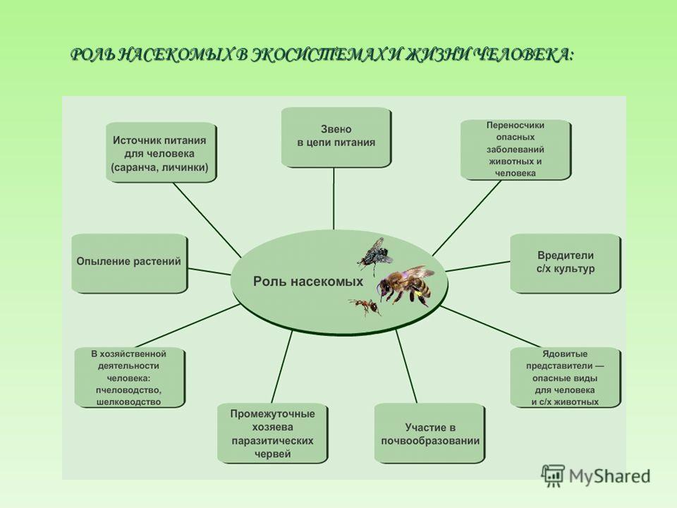 Тутовый шелкопряд - единственное насекомое, которое человек одомашнил до такой степени, что оно уже не способно жить в природе. Родина этого вида - Гималаи. Открыли шелководство в Китае, и это изобретение китайцев - вровень с открытием ими пороха и б