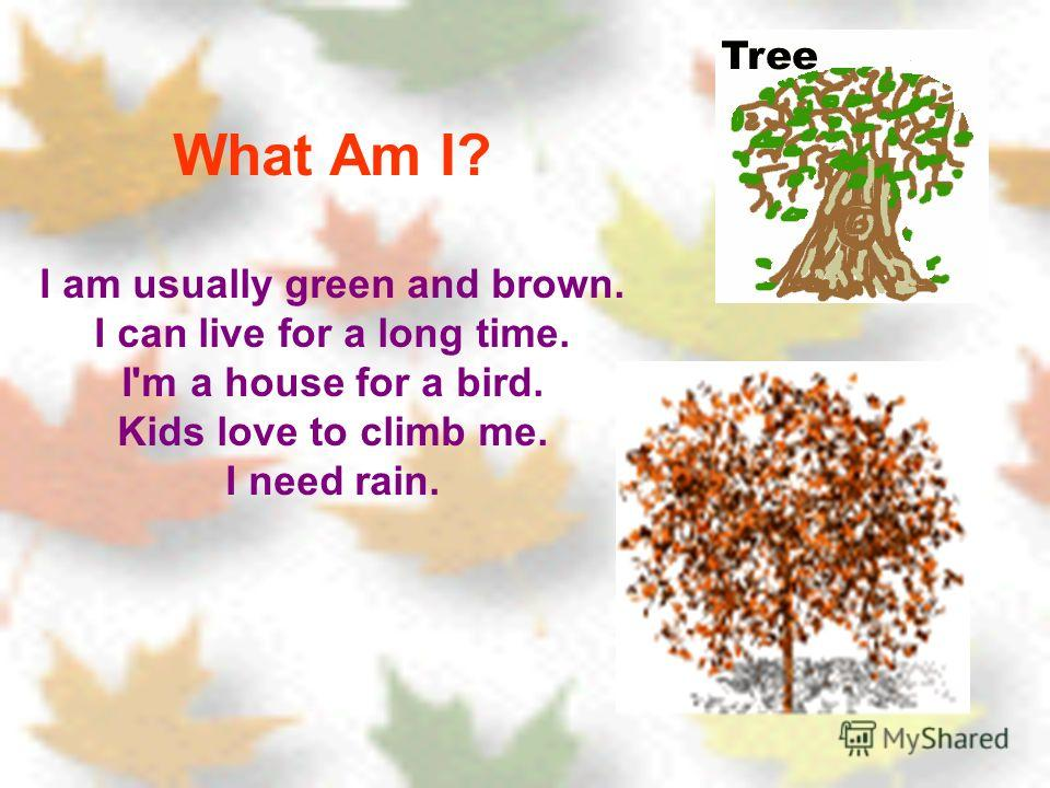 What Am I? I am usually green and brown. I can live for a long time. I'm a house for a bird. Kids love to climb me. I need rain.