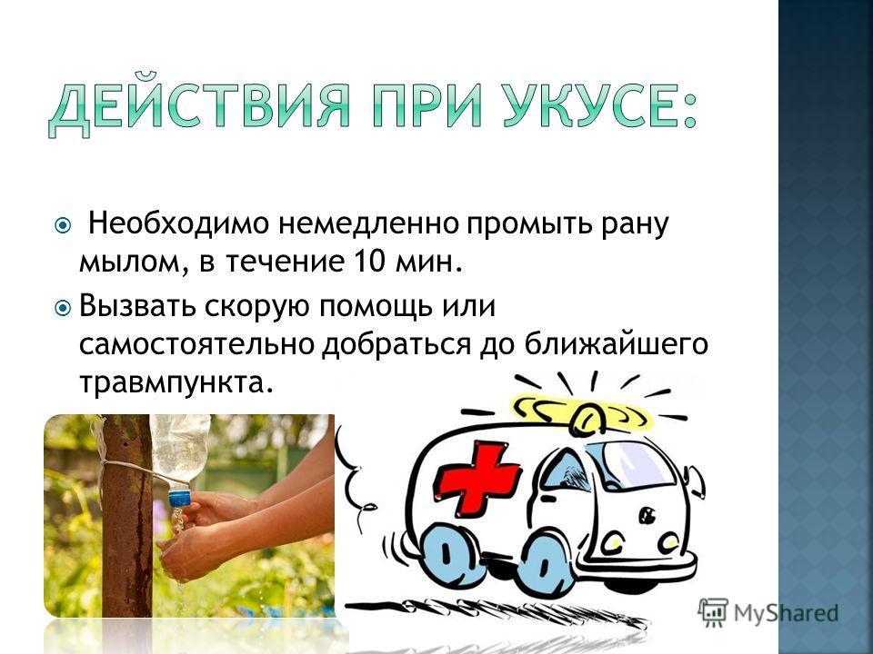 Необходимо немедленно промыть рану мылом, в течение 10 мин. Вызвать скорую помощь или самостоятельно добраться до ближайшего травмпункта.