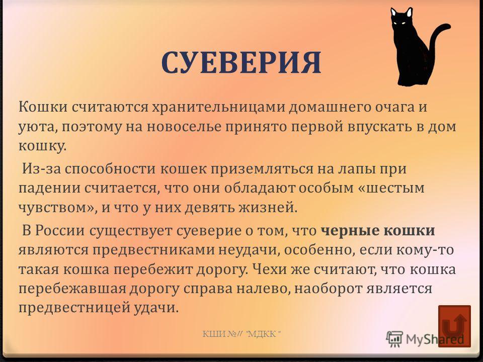 СУЕВЕРИЯ Кошки считаются хранительницами домашнего очага и уюта, поэтому на новоселье принято первой впускать в дом кошку. Из-за способности кошек приземляться на лапы при падении считается, что они обладают особым «шестым чувством», и что у них девя