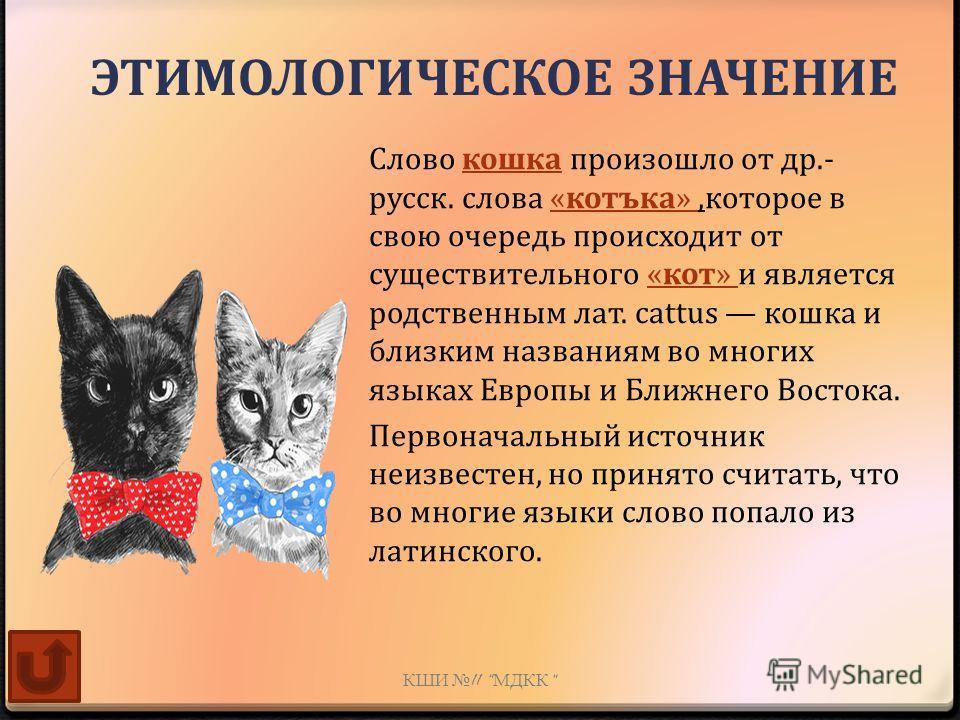 Слово кошка произошло от др.- русск. слова «котъка»,которое в свою очередь происходит от существительного «кот» и является родственным лат. cattus кошка и близким названиям во многих языках Европы и Ближнего Востока. Первоначальный источник неизвесте