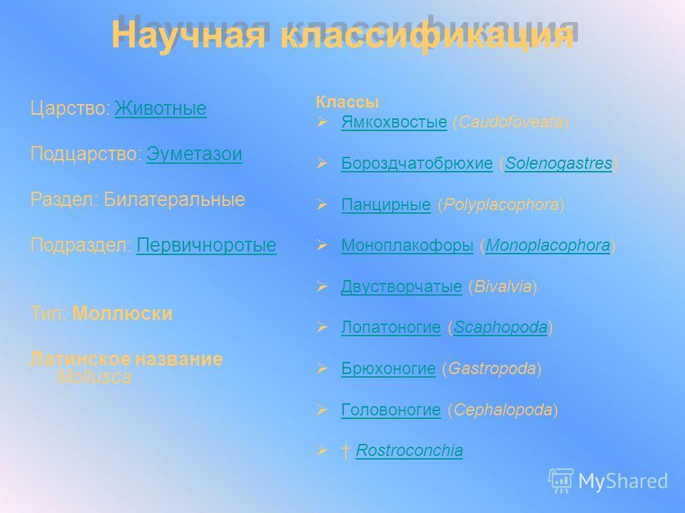 Классы Ямкохвостые (Caudofoveata) Ямкохвостые Бороздчатобрюхие (Solenogastres) БороздчатобрюхиеSolenogastres Панцирные (Polyplacophora) Панцирные Моноплакофоры (Monoplacophora) МоноплакофорыMonoplacophora Двустворчатые (Bivalvia) Двустворчатые Лопато