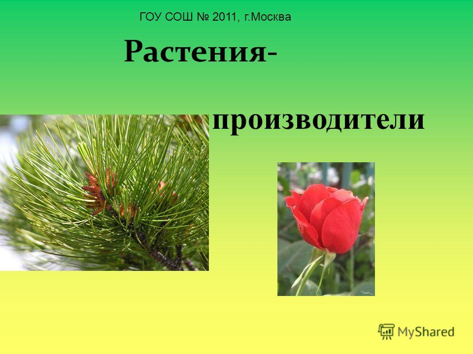 Растения- производители ГОУ СОШ 2011, г.Москва