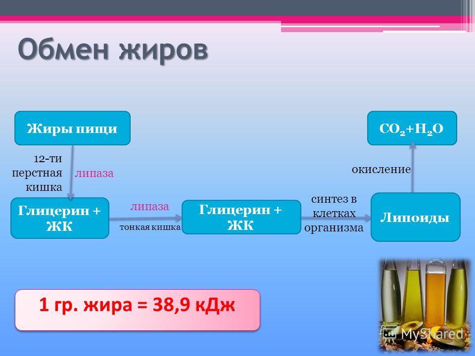 Обмен жиров Жиры пищи Глицерин + ЖК CO 2 +H 2 O 1 гр. жира = 38,9 кДж 12-ти перстная кишка липаза тонкая кишка липаза синтез в клетках организма Липоиды