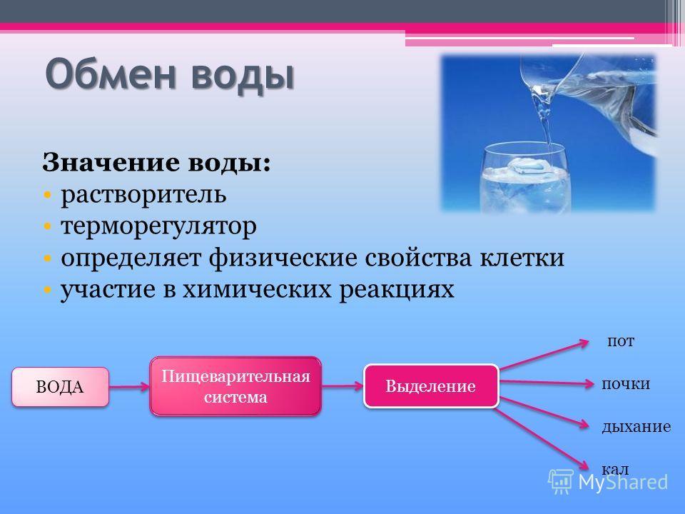 Обмен воды Значение воды: растворитель терморегулятор определяет физические свойства клетки участие в химических реакциях ВОДА Пищеварительная система пот почки дыхание кал Выделение