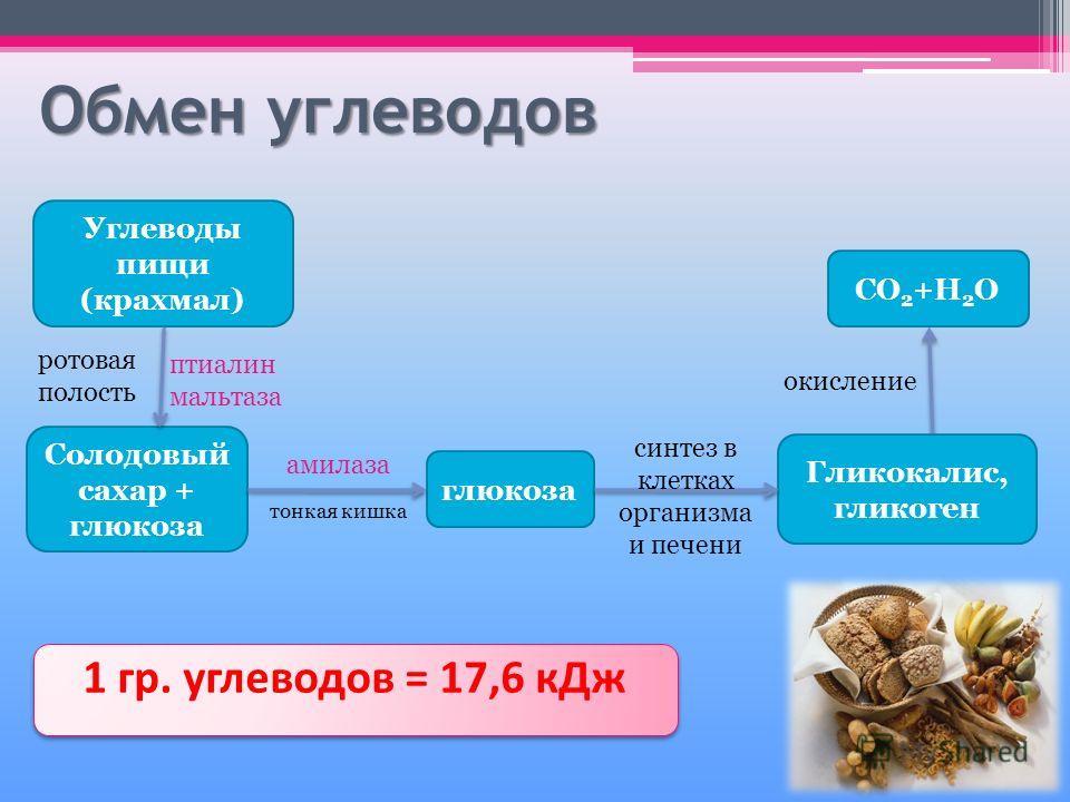 Обмен углеводов Углеводы пищи (крахмал) Солодовый сахар + глюкоза глюкоза Гликокалис, гликоген CO 2 +H 2 O 1 гр. углеводов = 17,6 кДж ротовая полость птиалин мальтаза тонкая кишка амилаза синтез в клетках организма и печени окисление
