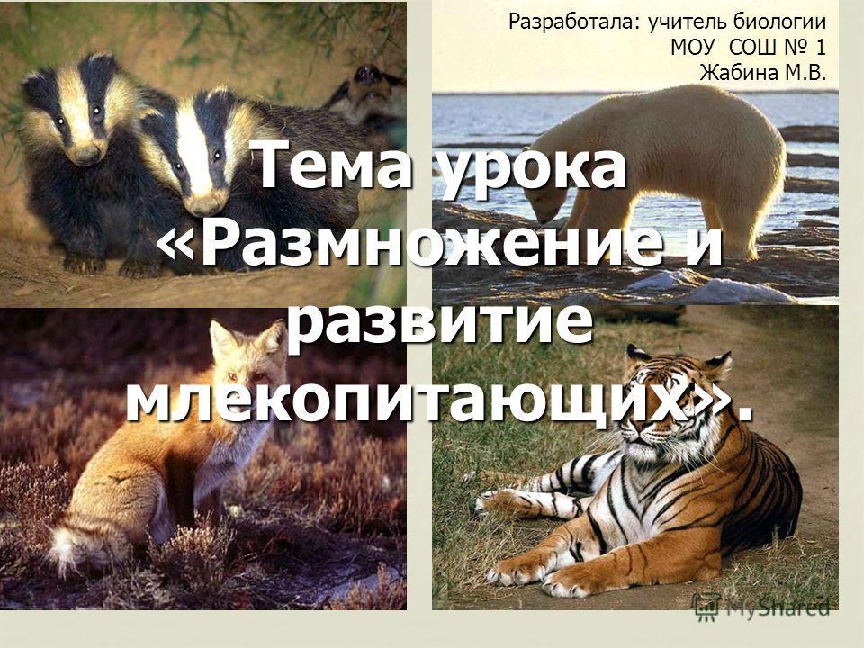 Тема урока «Размножение и развитие млекопитающих». Разработала: учитель биологии МОУ СОШ 1 Жабина М.В.