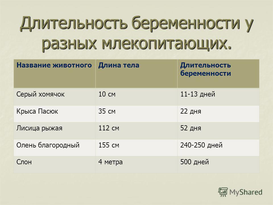 Длительность беременности у разных млекопитающих. Название животногоДлина телаДлительность беременности Серый хомячок10 см11-13 дней Крыса Пасюк35 см22 дня Лисица рыжая112 см52 дня Олень благородный155 см240-250 дней Слон4 метра500 дней