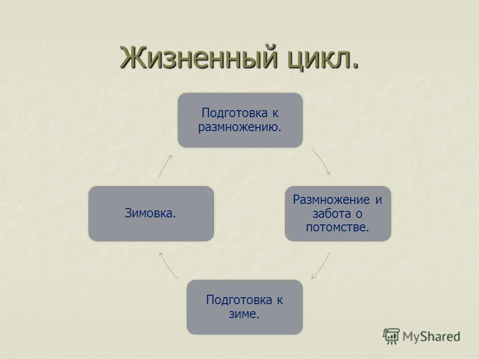 Жизненный цикл. Подготовка к размножению. Размножение и забота о потомстве. Подготовка к зиме. Зимовка.