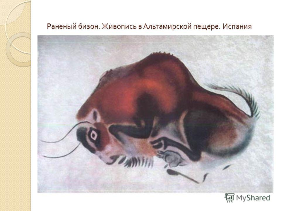 Раненый бизон. Живопись в Альтамирской пещере. Испания