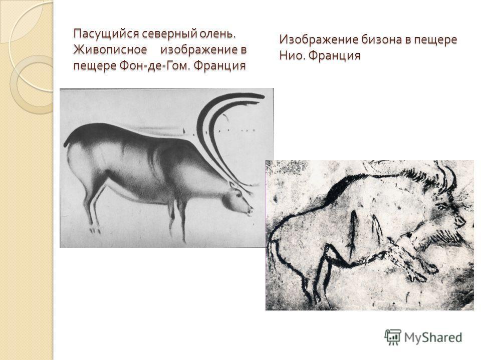 Пасущийся северный олень. Живописное изображение в пещере Фон - де - Гом. Франция Изображение бизона в пещере Нио. Франция