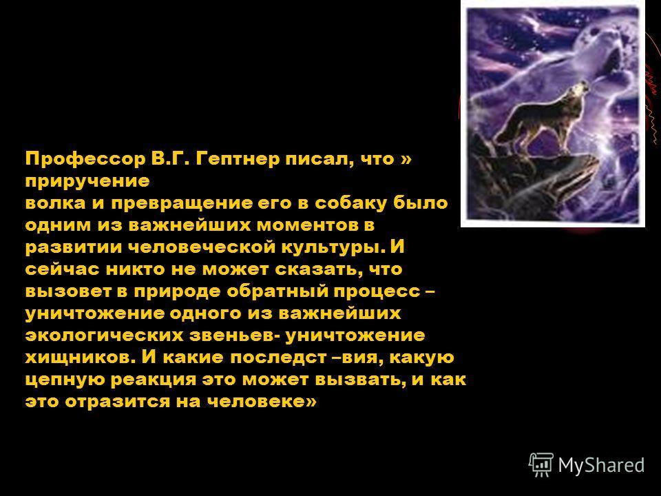 Профессор В.Г. Гептнер писал, что » приручение волка и превращение его в собаку было одним из важнейших моментов в развитии человеческой культуры. И сейчас никто не может сказать, что вызовет в природе обратный процесс – уничтожение одного из важнейш
