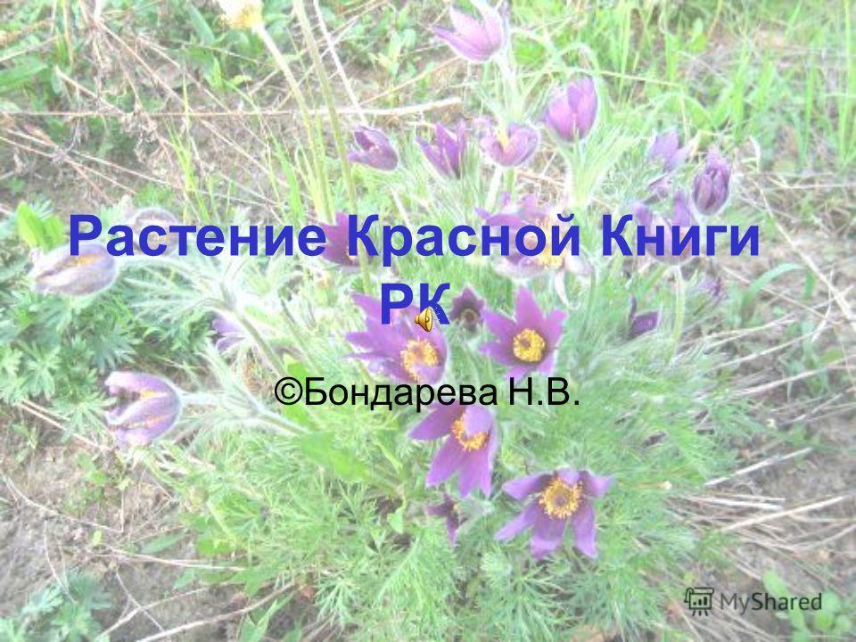 Растение красной книги рк бондарева
