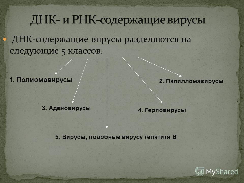 ДНК-содержащие вирусы разделяются на следующие 5 классов. 1. Полиомавирусы 2. Папилломавирусы 3. Аденовирусы 4. Герповирусы 5. Вирусы, подобные вирусу гепатита В