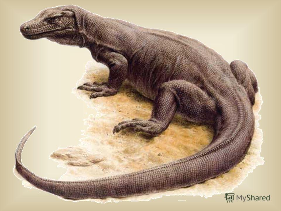 Это чудовище похоже на дракона, длина которого достигает почти 3 метра, живёт на острове Комодо. Массивный хвост, большие когтистые лапы, огромная, почти до 40 см, голова, пасть, вооруженная множеством зубов. Туловище его покрыто мелкой чешуей. Изо р