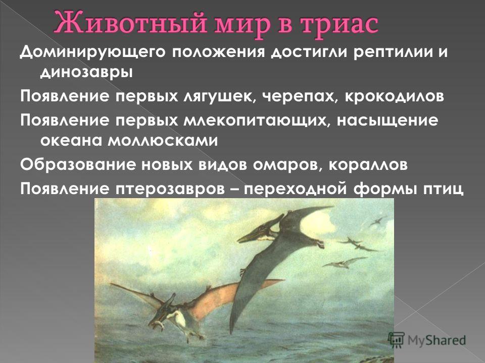 Доминирующего положения достигли рептилии и динозавры Появление первых лягушек, черепах, крокодилов Появление первых млекопитающих, насыщение океана моллюсками Образование новых видов омаров, кораллов Появление птерозавров – переходной формы птиц