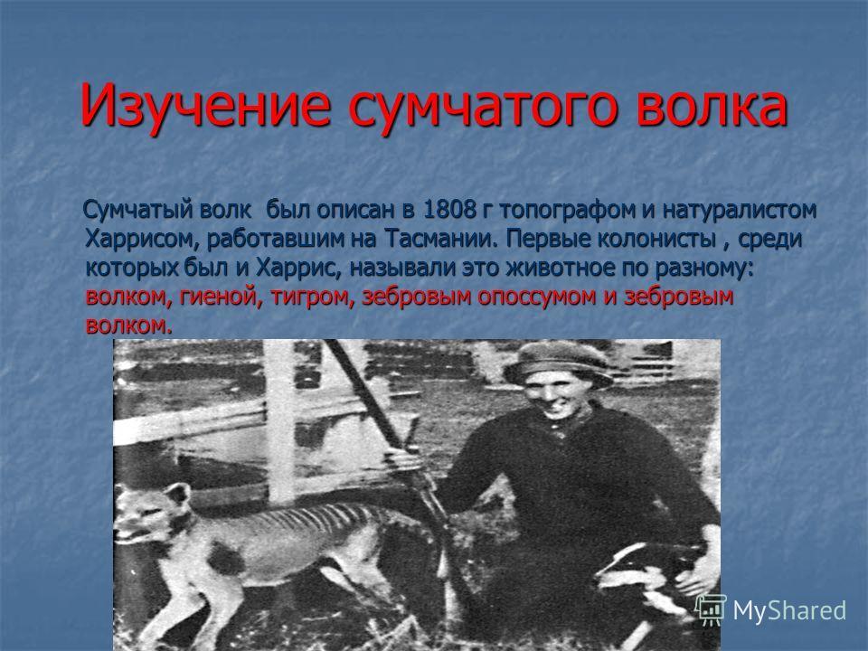 Изучение сумчатого волка Сумчатый волк был описан в 1808 г топографом и натуралистом Харрисом, работавшим на Тасмании. Первые колонисты, среди которых был и Харрис, называли это животное по разному: волком, гиеной, тигром, зебровым опоссумом и зебров