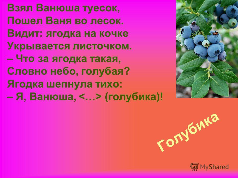 Голубика Взял Ванюша туесок, Пошел Ваня во лесок. Видит: ягодка на кочке Укрывается листочком. – Что за ягодка такая, Словно небо, голубая? Ягодка шепнула тихо: – Я, Ванюша, (голубика)!