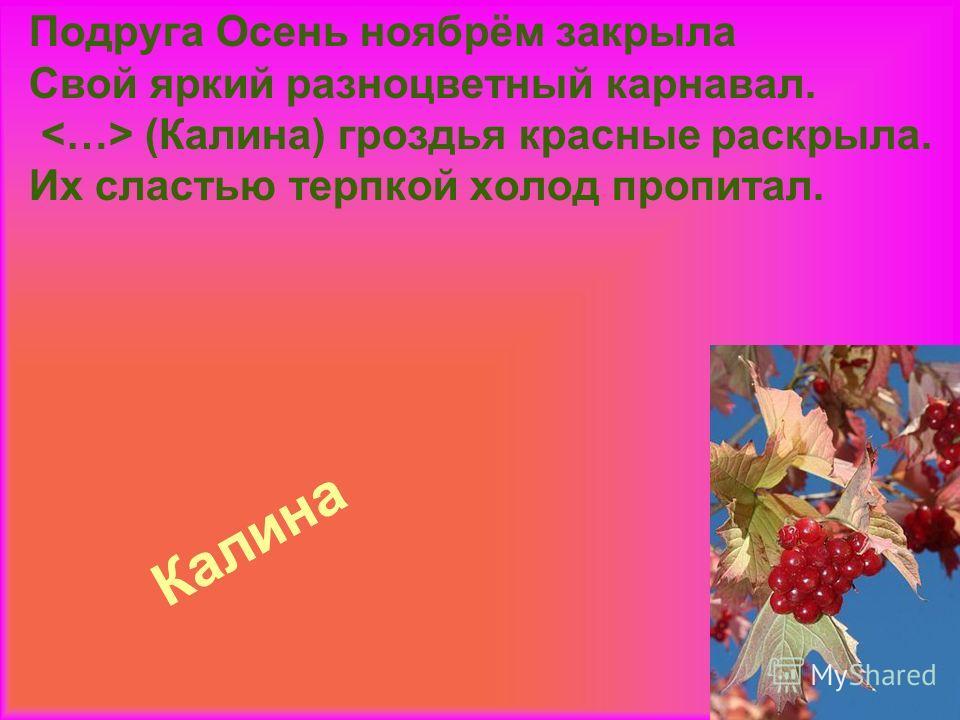 Калина Подруга Осень ноябрём закрыла Свой яркий разноцветный карнавал. (Калина) гроздья красные раскрыла. Их сластью терпкой холод пропитал.