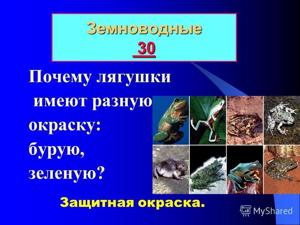 Исключи лишнее: лягушка, жаба, тритон, саламандра. Земноводные 20 20 20 Саламандра.