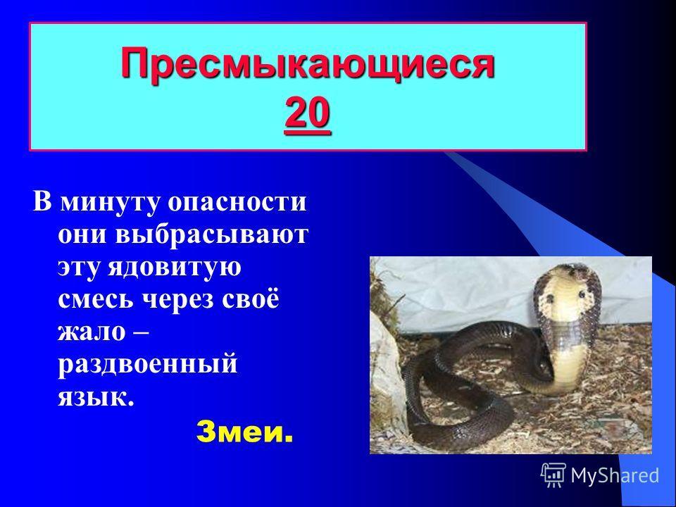 Какие животные относятся к пресмыкающимся? Пресмыкающиеся 10 10 Крокодилы, ящерицы, змеи, черепахи.