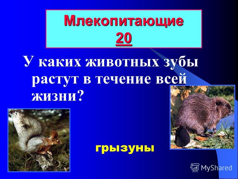Главное отличие млекопитающих от других животных? Млекопитающие 10 10 10