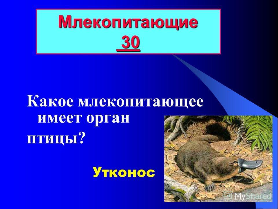 У каких животных зубы растут в течение всей жизни? Млекопитающие 20 20 грызуны