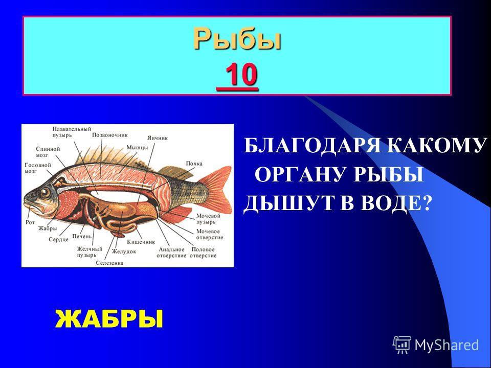 10 20 30 40 50 Рыбы Земноводные Пресмыкающиеся Птицы Млекопитающие Самые, самая, самое