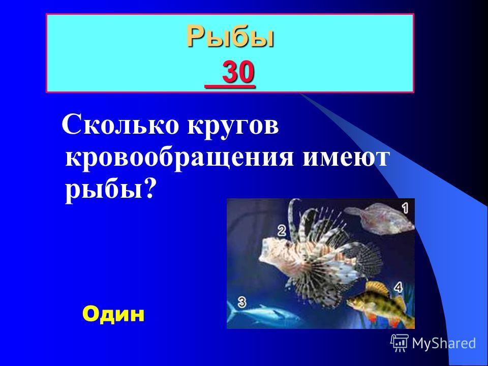Какие рыбы относятся к хрящевым? РЫБЫ 20 20 20 Акулы и скаты