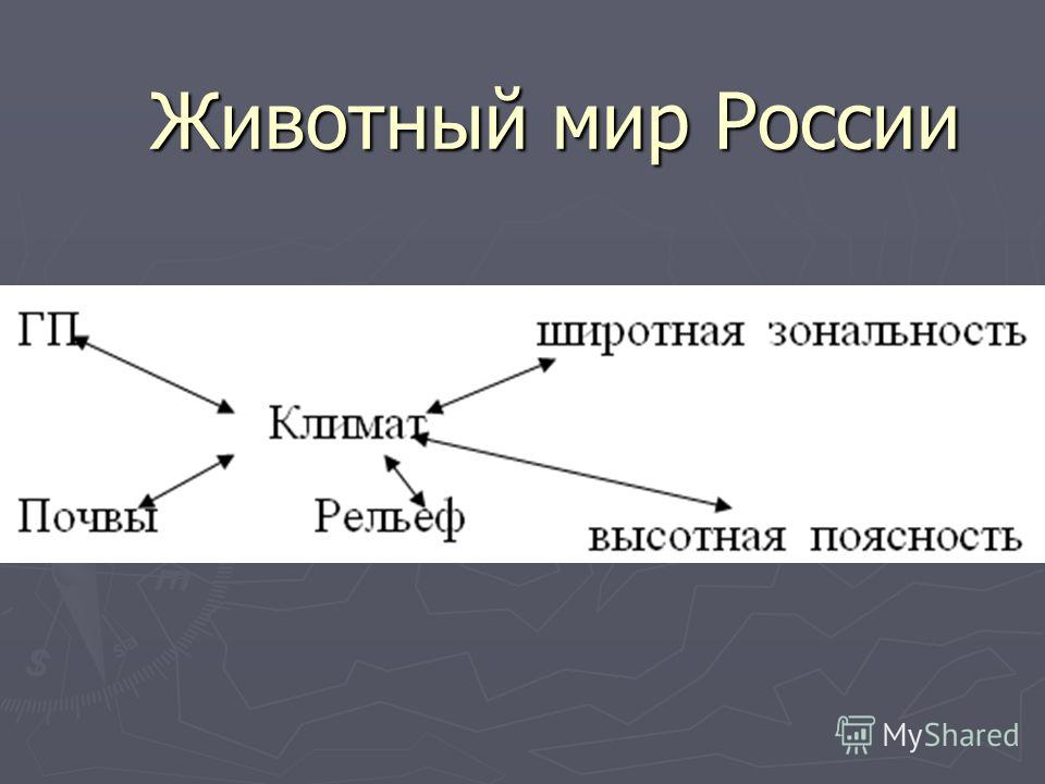 Животный мир России