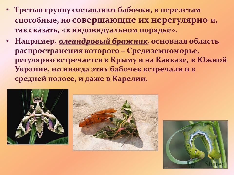 Третью группу составляют бабочки, к перелетам способные, но совершающие их нерегулярно и, так сказать, «в индивидуальном порядке». олеандровый бражник Например, олеандровый бражник, основная область распространения которого – Средиземноморье, регуляр