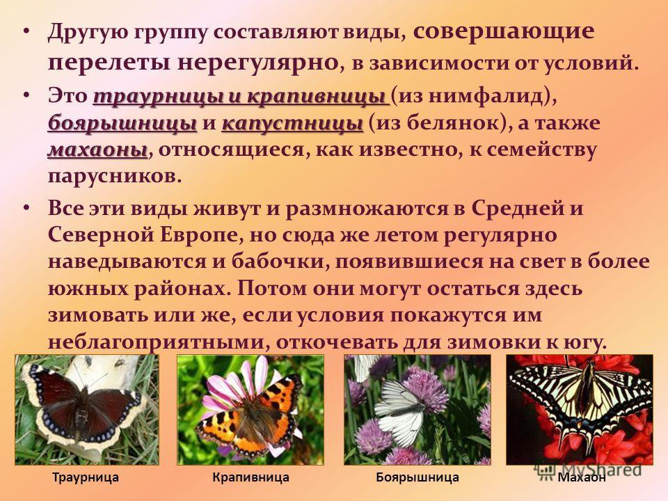 Другую группу составляют виды, совершающие перелеты нерегулярно, в зависимости от условий. траурницы и крапивницы боярышницыкапустницы махаоны Это траурницы и крапивницы (из нимфалид), боярышницы и капустницы (из белянок), а также махаоны, относящиес