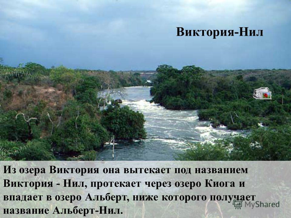 Река Кагера - исток Нила. Эта река берёт своё начало на высоте более 2000 м на одном из массивов Восточной Африки (Рувензори) и впадает в озеро Виктория.