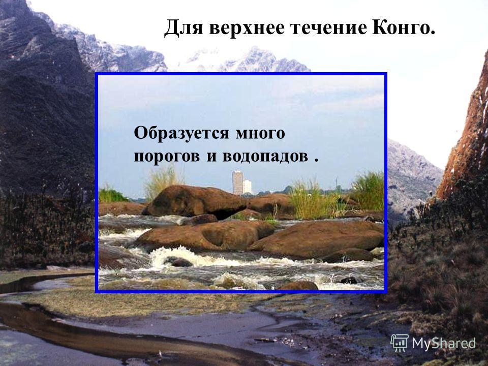Самая полноводная и вторая по длине река Африки. Длина от истока Луалабы 4320 км, от истока Чамбези - свыше 4700 км. Площадь бассейна 3,7 млн. км²