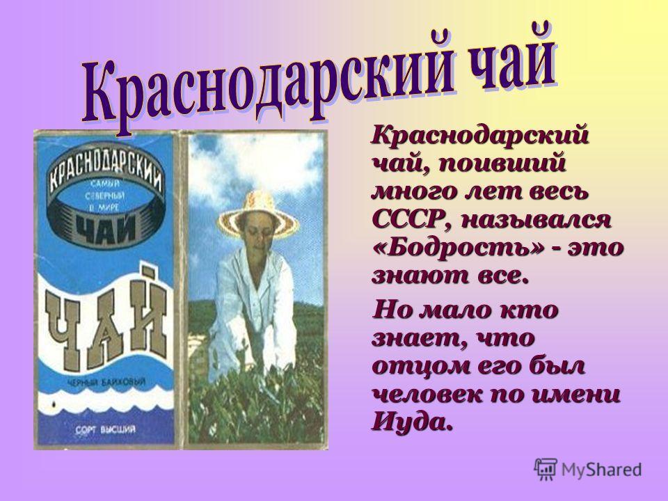 Краснодарский чай, поивший много лет весь СССР, назывался «Бодрость» - это знают все. Но мало кто знает, что отцом его был человек по имени Иуда. Но мало кто знает, что отцом его был человек по имени Иуда.