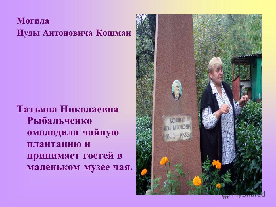 Могила Иуды Антоновича Кошман Татьяна Николаевна Рыбальченко омолодила чайную плантацию и принимает гостей в маленьком музее чая.