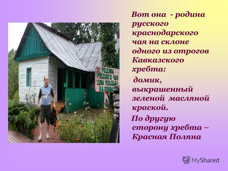 Вот она - родина русского краснодарского чая на склоне одного из отрогов Кавказского хребта: домик, выкрашенный зеленой масляной краской. По другую сторону хребта – Красная Поляна
