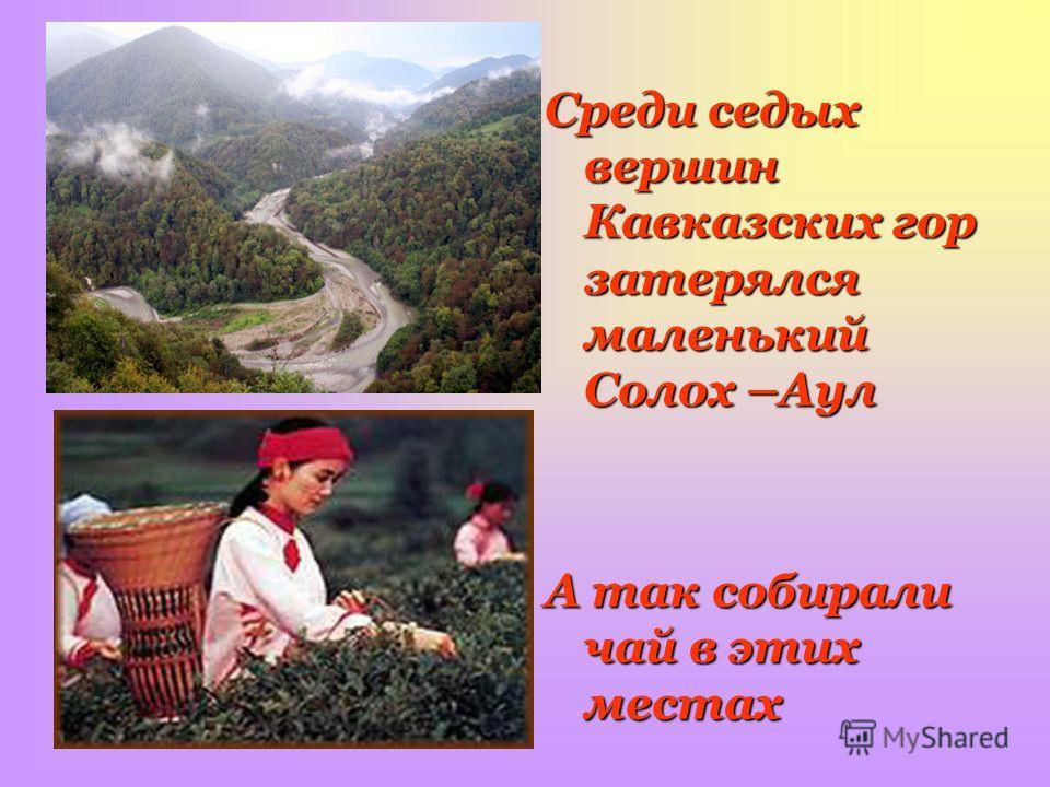 Среди седых вершин Кавказских гор затерялся маленький Солох –Аул А так собирали чай в этих местах