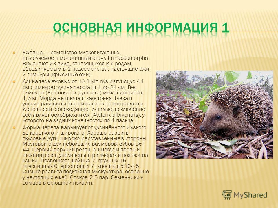 Ежовые семейство млекопитающих, выделяемое в монотипный отряд Erinaceomorpha. Включают 23 вида, относящихся к 7 родам, объединяемым в 2 подсемейства: настоящие ежи и гимнуры (крысиные ежи). Длина тела ежовых от 10 (Hylomys parvus) до 44 см (гимнура);