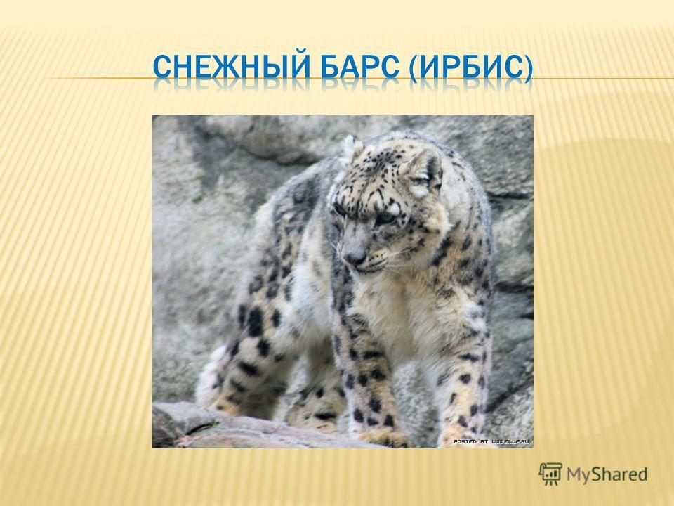 Красная книга татарстана скачать бесплатно