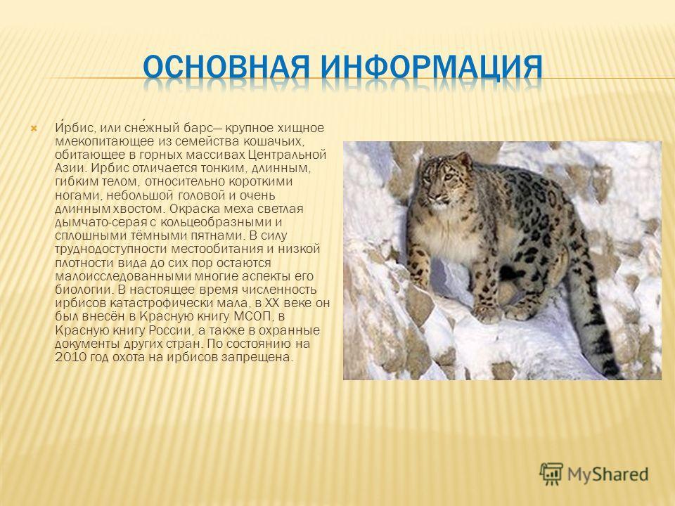 Ирбис, или снежный барс крупное хищное млекопитающее из семейства кошачьих, обитающее в горных массивах Центральной Азии. Ирбис отличается тонким, длинным, гибким телом, относительно короткими ногами, небольшой головой и очень длинным хвостом. Окраск