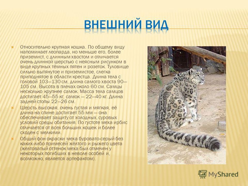 Относительно крупная кошка. По общему виду напоминает леопарда, но меньше его, более приземист, с длинным хвостом и отличается очень длинной шерстью с неясным рисунком в виде крупных тёмных пятен и розеток. Туловище сильно вытянутое и приземистое, сл