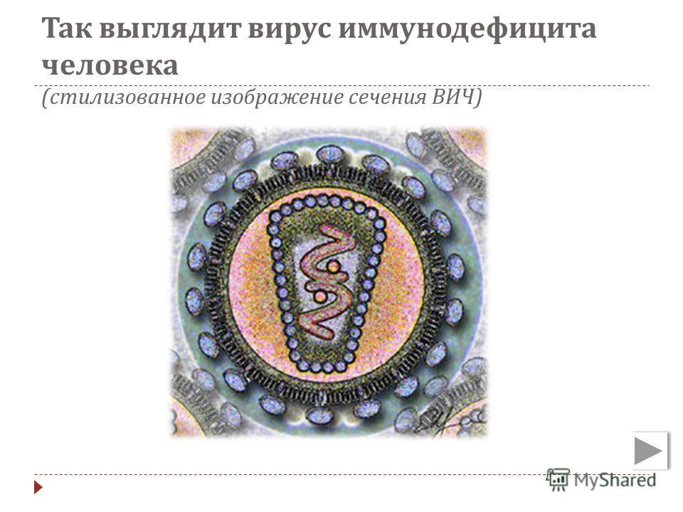 Так выглядит вирус иммунодефицита человека ( стилизованное изображение сечения ВИЧ )
